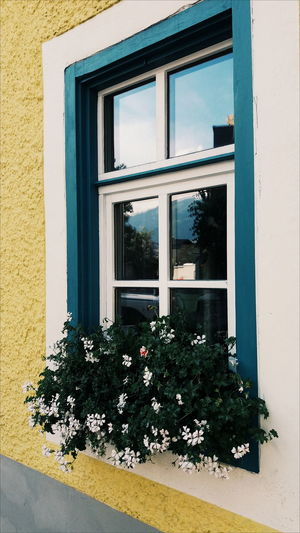 Such a cute window ... or not? Colors Austria Saalfelden Flowers Yellow Blue White EyeEm Selects Window Architecture Building Exterior Built Structure Window Box Closed