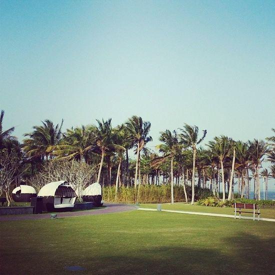 Hello palm tree! Sanya Westin Familytrip