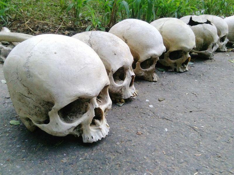 Sull Day No People Skulls And Bones Skull Art Skulls Skullcandy Skulls💀 Skull And Bones Skullface SkullOfTheDay Skull Skullhead Skulls & Bones Skulldiggery Skullring India Indiapictures Delhi 10