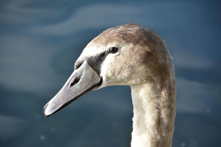 Close-up of bird looking away outdoors