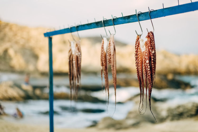 Close-up of octopus hanging on rack
