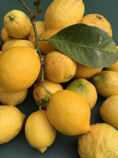 Just Picked These Lemons Lemons Love ♥ Takink Pics Picked Tree Spring Springtime Lemonade Juice Many Our Best Pics Outdoors Still Life Nature No People