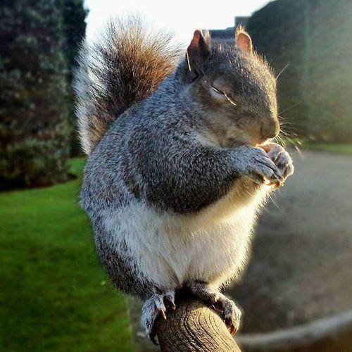 Meditando. London Squirrel