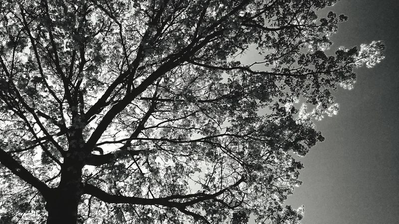 Hugging A Tree, the Tree in front of my house, Playing With Sunlight, Enjoying Nature in Monochrome Black And White Photography