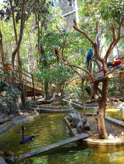 Parrots bird Beauty In Nature Tree Plant Las Leyendas