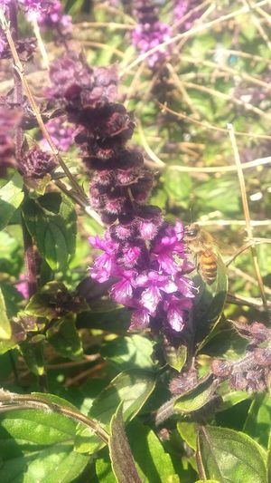 Growth Nature Flower Beauty In Nature Purple No People Outdoors Bee 🐝 Close-up