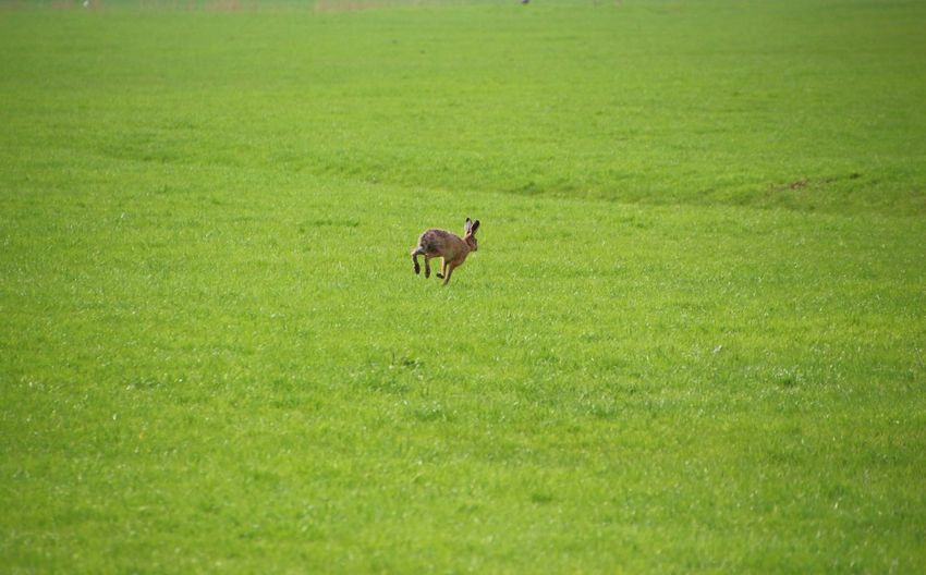 High angle view of hare running on grassy field
