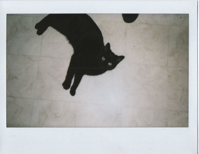 Meet Tarot My Cat Instax Black Cats Kitten Black Kitten Superstition  Nostalgic  Vintage Look Film Polaroid Filmisnotdead Black Cat Cats Of EyeEm My Cat We Are Family From My Point Of View Floor Kitty Film Photography Faces In Places