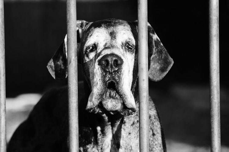Dogs Pet Love Pet Photography  Pet Portraits Pets Corner Relationship Relationships Dog Dogslife Domestic Animals Mammal Pet Pet Portrait Pets Prison Relationship Difficulties