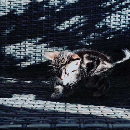 Sunlight falling on kitten in wicker container