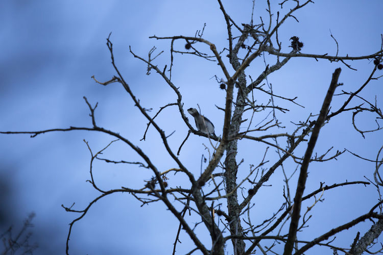 Low angle view of bird perching on tree