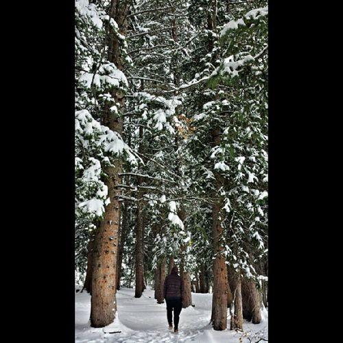 ..one with the trees Naturewalk  Treezone Beaverfood Tourguide moosetracks