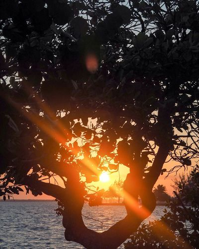 Sundown in Chetumal Tree Nature Sunset Orange Color Beauty In Nature Silhouette Sun Water Outdoors Scenics No People Sky Day Caribbean Sea