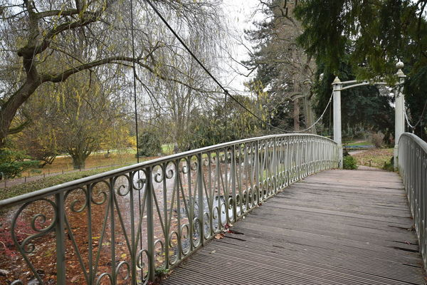 Beauty In Nature Branch Bridge - Man Made Structure Day Footbridge Growth Nature No People Outdoors Railing Sky Steps And Staircases The Way Forward Tranquility Tree Premium Premium Collection