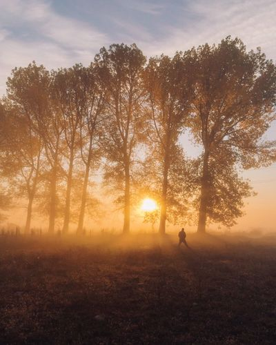 Sunrise Tree Nature Beauty In Nature One Person Tranquility Silhouette Scenics Landscape Tranquil Scene Outdoors Real People Field Sky Day Sunrise Sunset