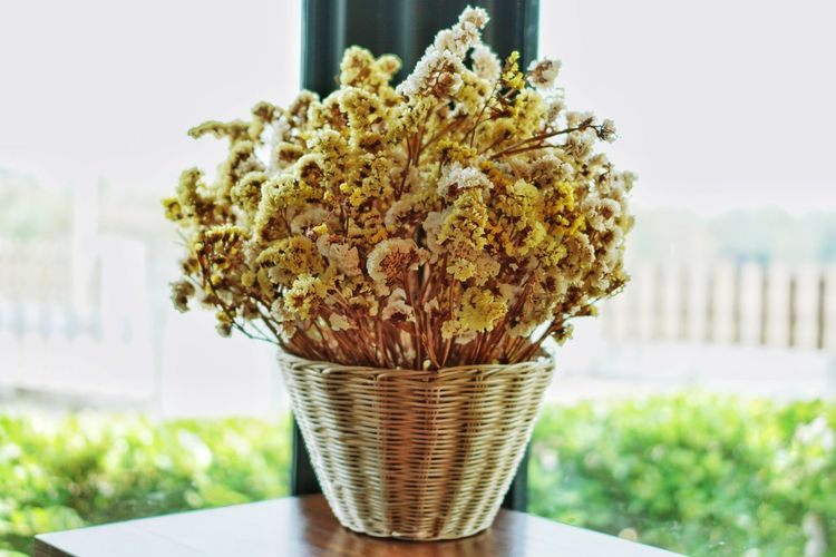Dried flowers in wooden pots are woven on wooden boards. Plant No People Outdoors Freshness Nature Close-up Day Growth