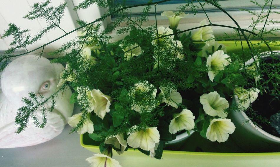 Blumen I Love Flovers