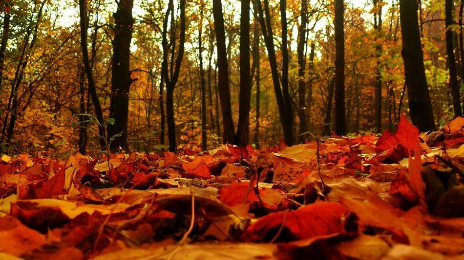 Autumn Colors Of Autumn Autumn Leaves Autumn Trees Autumn Photo Autumn2013 Autumn Melancholy
