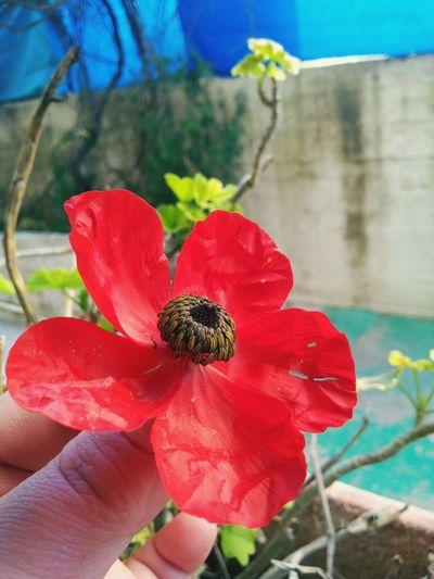 Flowers :) Palestine Jerusalem Butiful♥ Happy :) Relaxing Photography Photo Camera (☆^ー^☆)