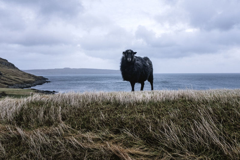 Horse standing on field by sea against sky