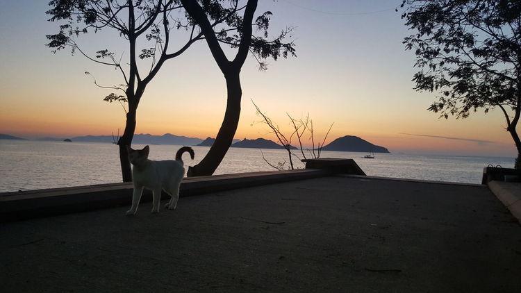 Turgutreis TURKEY Nature sunset Cat Sunset Sunset_collection Turgutreis
