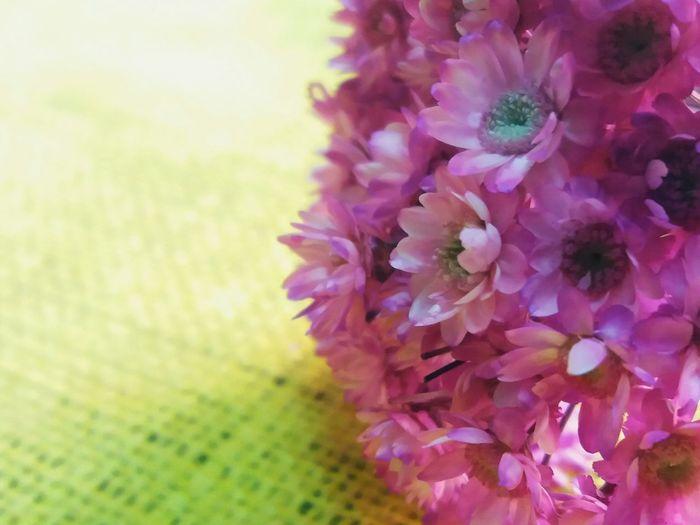 Flower LifeGreen Naturelovers Flower Head Flower Springtime Petal Purple Defocused Blossom Close-up Plant
