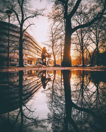 Embrace Urban Life Reflection Tree Water Nature Sunlight Symmetry Sunset Outdoors Bare Tree Built_Structure Scenics Building Exterior Sun Sky Beauty In Nature No People Architecture Day Fresh On Market 2016