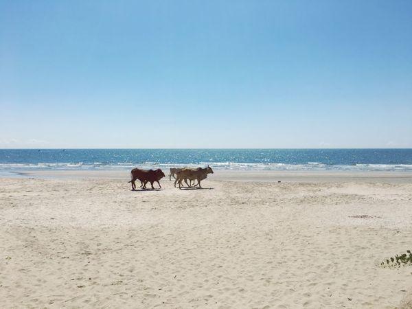 Sea Beach Land Water Horizon Over Water Sky Mammal