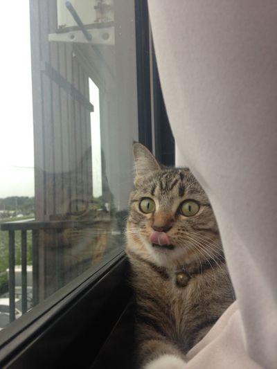 Portrait of cat looking through window