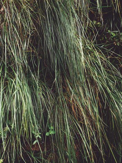 Full frame shot of bamboo on field