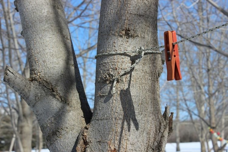 Close-Up Of Clothes Peg On Clothesline Hanging From Tree