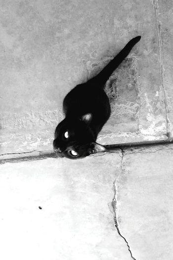 Gatitina❤ Cats