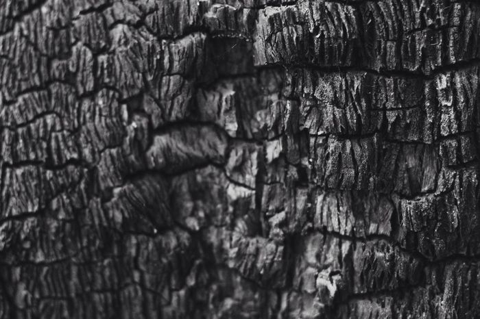 Textures in Nature pt. 4 : charred gumtree Backgrounds Textured  Pattern No People Day Full Frame Close-up Outdoors Nature Outbackaustralia Flinders Ranges Travel Destinations EyeEm Selects Plants Blackandwhite Australia South Australia EyeEmNewHere