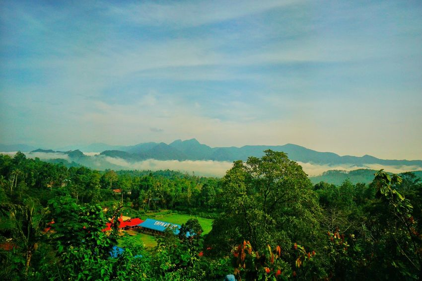 The warmth of morning view in a village in Sumatera Barat, Indonesi. Photo On Sale Portfolio Of Arif Wibowo Photography By Arif Wibowo Photography By @jgawibowo Photography By Jgawibowo INDONESIA Scenic View Tree Flower Rural Scene Tea Crop Mountain Agriculture Beauty Multi Colored Summer Sky
