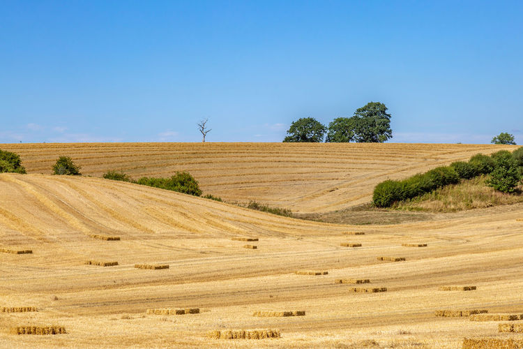 Hay stacks in Sussex fields during harvesting Haystack Industry Rural Agriculture Beauty In Nature Countryside Day Environment Field Harvest Harvesting Hay Land Landscape Nature No People Plant Rolling Landscape Rural Scene Scenics - Nature Sky Summer Sussex Tranquil Scene Tranquility