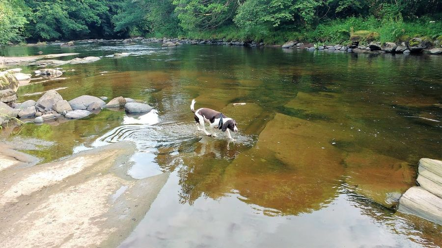 Allan Water River Allan Scotland Dog River Rocks Swimming Tree Water