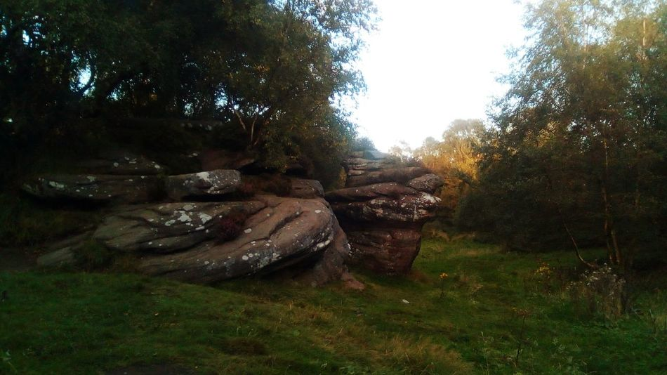 Brimham Rocks Brimhamrocks Brimham Rocks Yorkshire Brimham Moor National Trust 🇬🇧 Nidderdale North Yorkshire Outstanding Natural Beauty Tree No People Nature Grass Growth Outdoors Day Beauty In Nature Sky