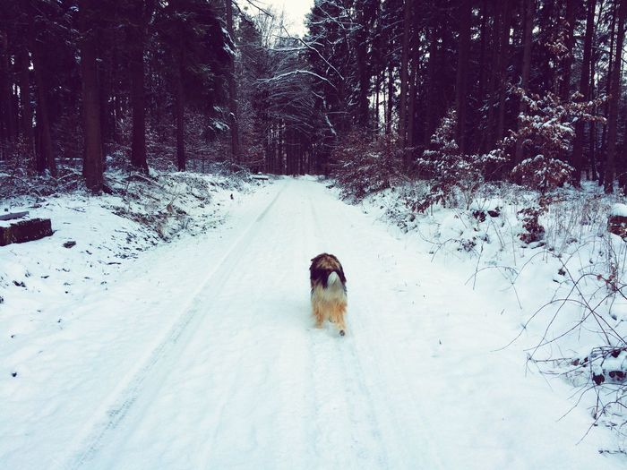 Waldspaziergang Starting A Trip Mein Hund Fussel Fussel