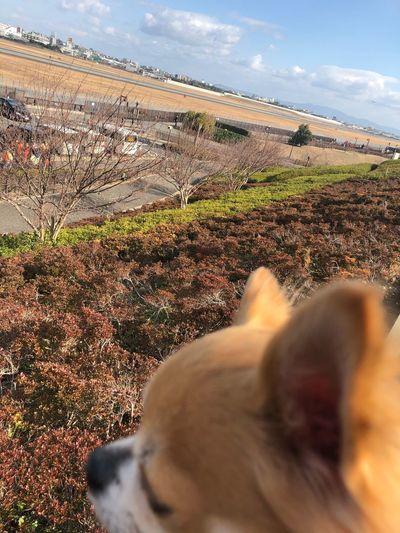 EyeEm Selects Sky Cloud - Sky Land One Animal Animal Themes Mammal Vertebrate Dog Day Canine Domestic Animal Landscape Field Pets Domestic Animals Nature Environment Plant Sunlight