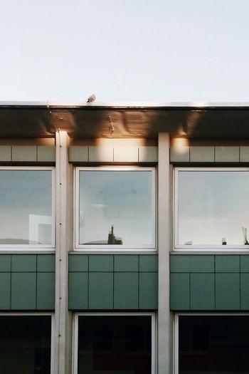 Sunspot Pigeon Bremerhaven Architecture VSCO