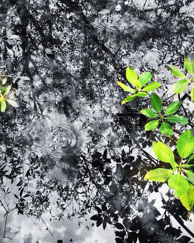Reflection of my life Growth Nature Plant Leaf Fragility Flower Beauty In Nature Freshness Tree No People Water Outdoors Day Close-up Tranquility Flower Head