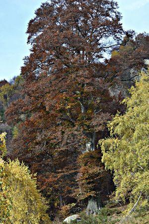 TreePorn Colors Of Autumn