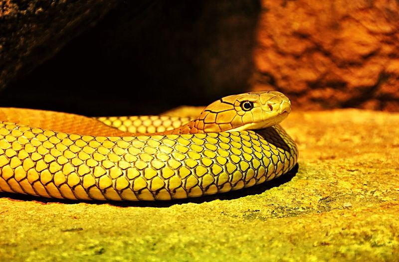 View of snake on rock