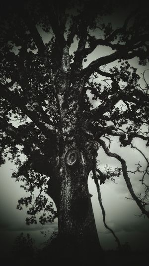 Spooky Tree Taking Photos On My Walk Today Field Trip Gods Art Tree_collection  TreePorn The Great Outdoors - 2016 EyeEm Awards Nightphotography Peaceful Scary Faces In The Tree Haunts My Dreems Poltergeist EyeEm Best Shots EyeEm Gallery Wow Shot EyeEm Best Edits Gorgeous ♥ I Took This Picture EyeEm Best Shots - Nature Beauty In Nature Check This Out I ❤this Picture My Happy Place