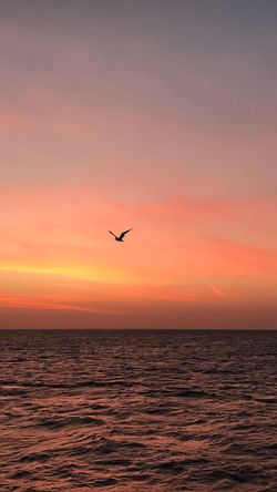 Flying Sea Bird Sunrise Frredom