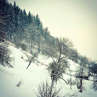 Romania Brasov Moieciu De Sus Winter Wintertime Winter Wonderland Winter Trees Winterscapes Landscape_photography