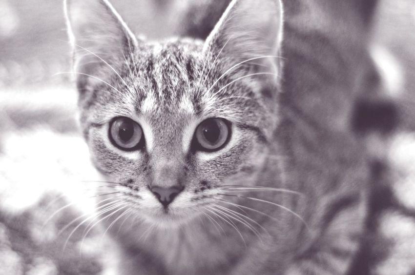 Cats Kitty Cute Pets Cuteeee♥♡♥ Catsagram Cat Welovecats