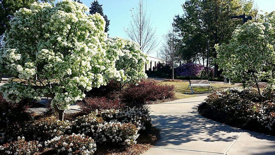 Georgia Spring Lifeuniversity Nature So Pretty!  Nofilter#noedit Beutiful Day