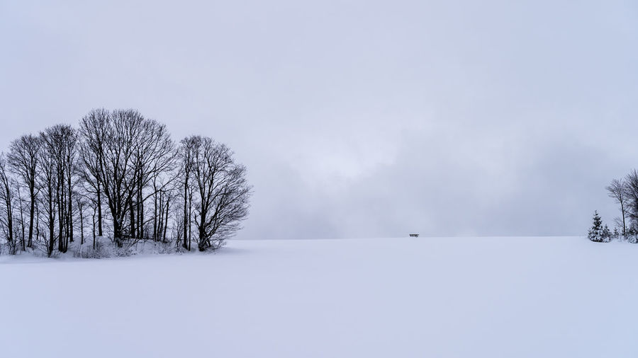 Empty lonely bench far away in white winter landscape with trees Snow Cold Temperature Winter Tree Plant Beauty In Nature Tranquil Scene Bare Tree Scenics - Nature White Color Sky Environment Landscape Field Tranquility No People Nature Land Day Outdoors Extreme Weather Snowing Blizzard