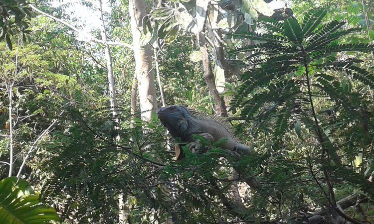 Break The Mold Animal Wildlife Animals In The Wild Tree Reptile Forest EyeEmNewHere